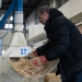 Eng. Sabatino La Froscia, BioHyst, feeds the Hyst machine with straw to process